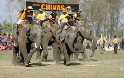 World Elephant Polo Championships